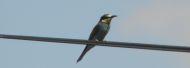 Birdwatching Alentejo Blog